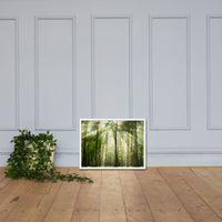 Sun Rays Through Treetops in the Forest Framed Photo Paper Wall Art Prints White / 18×24 - PIPAFINEART