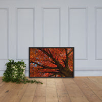 Shimmering Orange Botanical Nature Photo Framed Wall Art Print Black / 24×36 - PIPAFINEART