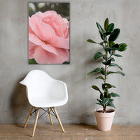 Pink Passion Rose Canvas Wall Art Prints 24×36 - PIPAFINEART