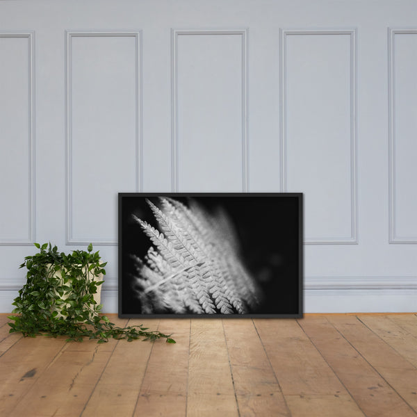 Fern Leaf In the Sunlight Black and White Botanical Nature Photo Framed Wall Art Print Black / 24×36 - PIPAFINEART
