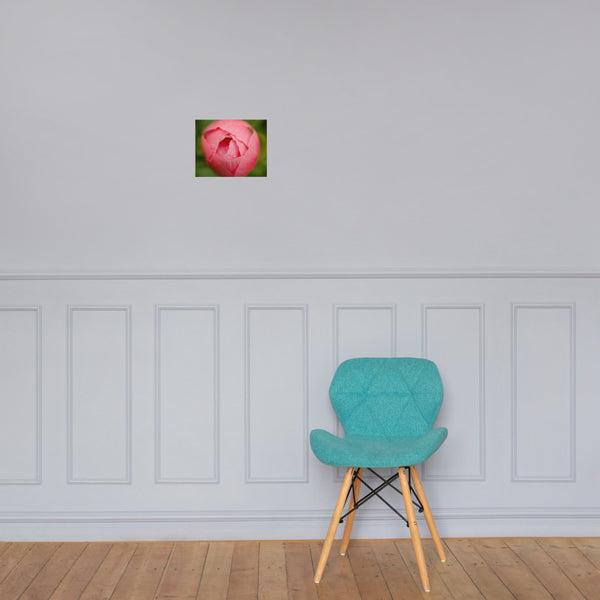Peony Bud Floral Nature Photo Loose Unframed Wall Art Prints 8×10 - PIPAFINEART