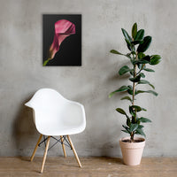 Pink Calla Lily Flower on Black Floral Nature Canvas Wall Art Prints 18×24 - PIPAFINEART