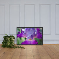 Glowing Iris Floral Nature Photo Framed Wall Art Print Black / 24×36 - PIPAFINEART