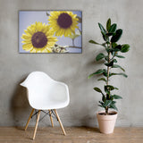 Aged Sunflowers Against Sky Floral Nature Canvas Wall Art Prints 24×36 - PIPAFINEART