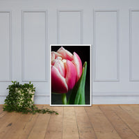 Pink and White Tulip Floral Nature Photo Framed Wall Art Print White / 24×36 - PIPAFINEART
