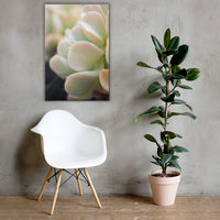 Succulent 4 Botanical Nature Canvas Wall Art Prints 24×36 - PIPAFINEART