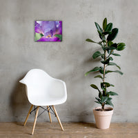 Glowing Iris Floral Nature Canvas Wall Art Prints 12×16 - PIPAFINEART