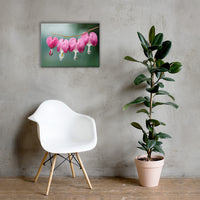 Be Still My Bleeding Heart Floral Nature Canvas Wall Art Prints 18×24 - PIPAFINEART