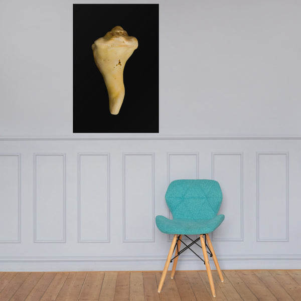 States of Erosion Image 8 Whelk Shell Coastal Nature Photo Loose Unframed Wall Art Prints 24×36 - PIPAFINEART
