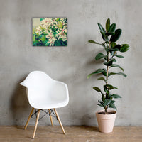 Indian Hawthorn Shrub in Bloom Colorized Floral Nature Canvas Wall Art Prints 16×20 - PIPAFINEART