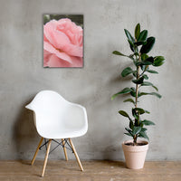 Pink Passion Rose Canvas Wall Art Prints 18×24 - PIPAFINEART