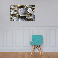 Mushrooms on Log Botanical Nature Photo Loose Unframed Wall Art Prints 24×36 - PIPAFINEART