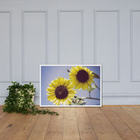 Aged Sunflowers Against Sky Floral Nature Photo Framed Wall Art Print White / 24×36 - PIPAFINEART