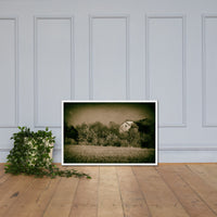 Abandoned Barn In The Trees Vintage Rural Landscape Scene Framed Photo Paper Wall Art Prints White / 24×36