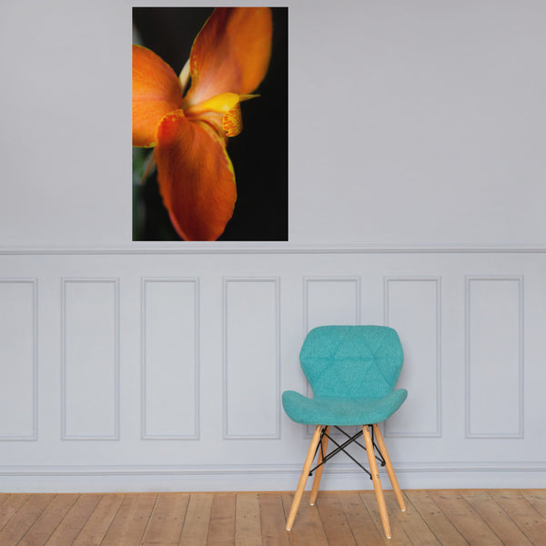 Orange Canna at Longwood Gardens Floral Nature Photo Loose Unframed Wall Art Prints 24×36 - PIPAFINEART
