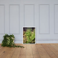 Growth of the Forest Floor Botanical Nature Photo Framed Wall Art Print White / 18×24 - PIPAFINEART