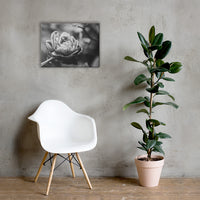 Perfect Petals High Contrast Black and White Floral Nature Canvas Wall Art Prints 18×24 - PIPAFINEART