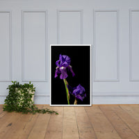 Iris on Black Floral Nature Photo Framed Wall Art Print White / 24×36 - PIPAFINEART