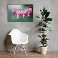 Be Still My Bleeding Heart Floral Nature Canvas Wall Art Prints 24×36 - PIPAFINEART
