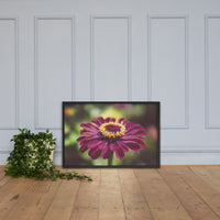 Moody Young-And-Old Age Pink Zinnia Flower Bloom Floral Nature Photo Framed Wall Art Print Black / 24×36 - PIPAFINEART