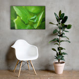 Cupped Droplet Botanical Nature Canvas Wall Art Prints 24×36 - PIPAFINEART
