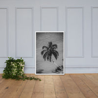 Palm Over Water Black and White Botanical Nature Photo Framed Wall Art Print White / 24×36 - PIPAFINEART