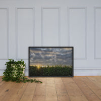 Rows of Corn Rural Landscape Framed Photo Paper Wall Art Prints Black / 24×36 - PIPAFINEART