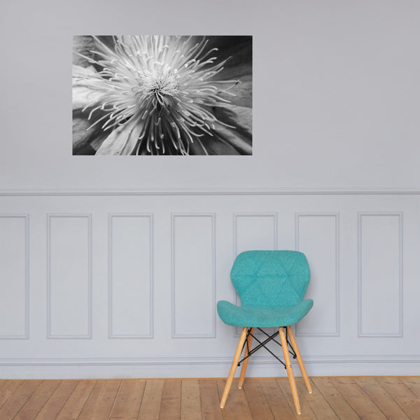 Center of Clematis Floral Nature Photo Loose Unframed Wall Art Prints 24×36 - PIPAFINEART