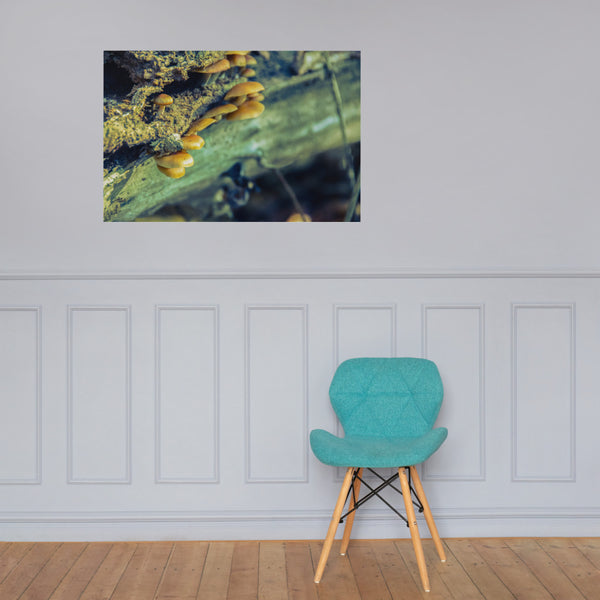 Aged Mushroom Botanical Nature Photo Loose Unframed Wall Art Prints 24×36 - PIPAFINEART