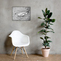 Fallen Leaf in The Rain Black and White Floral Nature Canvas Wall Art Prints 18×24 - PIPAFINEART