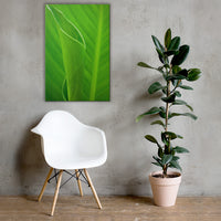 Leaves of Canna Lily Botanical Nature Canvas Wall Art Prints 24×36 - PIPAFINEART