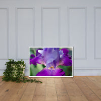 Glowing Iris Floral Nature Photo Framed Wall Art Print White / 24×36 - PIPAFINEART