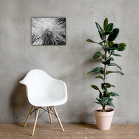 Center of Clematis Black and White Floral Nature Canvas Wall Art Prints 16×20 - PIPAFINEART