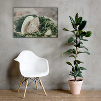 Seaweed and Shells Coastal Nature Canvas Wall Art Prints 24×36 - PIPAFINEART