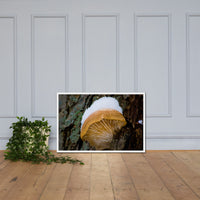 Snow Fungus Botanical Nature Photo Framed Wall Art Print White / 24×36 - PIPAFINEART