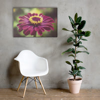 Moody Young-And-Old Age Pink Zinnia Floral Nature Canvas Wall Art Prints 24×36 - PIPAFINEART