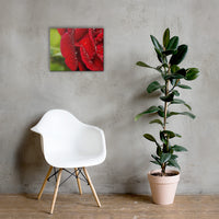 Bold and Beautiful Floor Floral Nature Canvas Wall Art Prints 16×20 - PIPAFINEART