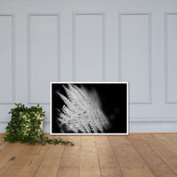 Fern Leaf In the Sunlight Black and White Botanical Nature Photo Framed Wall Art Print White / 24×36 - PIPAFINEART