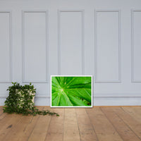 Peaceful Greenery Botanical Nature Photo Framed Wall Art Print White / 18×24 - PIPAFINEART
