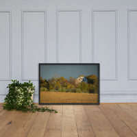 Abandoned Barn In The Trees Framed Photo Paper Wall Art Prints Black / 24×36