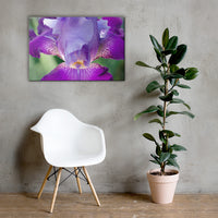 Glowing Iris Floral Nature Canvas Wall Art Prints 24×36 - PIPAFINEART