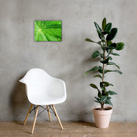 Peaceful Greenery Botanical Nature Canvas Wall Art Prints 12×16 - PIPAFINEART