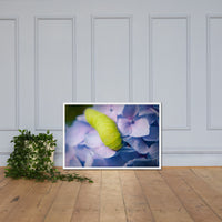Actias Luna Larvae on Hydrangea Floral Nature Photo Framed Wall Art Print White / 24×36 - PIPAFINEART