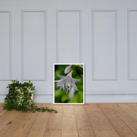 Hosta Bloom Floral Nature Photo Framed Wall Art Print White / 18×24 - PIPAFINEART