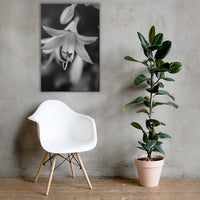 Hosta Bloom Black and White Floral Nature Canvas Wall Art Prints 24×36 - PIPAFINEART