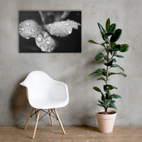 Raindrops on Wild Rose Plant Black and White Floral Nature Canvas Wall Art Prints 24×36 - PIPAFINEART