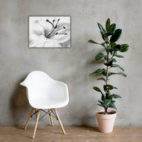 High Key Lily Black and White Floral Nature Canvas Wall Art Prints 18×24 - PIPAFINEART