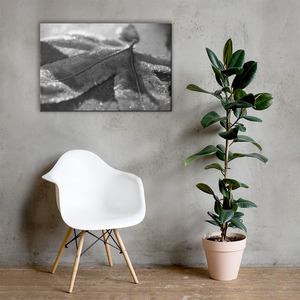 Frost Covered Leaf Black and White Floral Nature Canvas Wall Art Prints 24×36 - PIPAFINEART