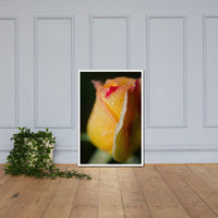 Dew on Yellow Rose Floral Nature Photo Framed Wall Art Print White / 24×36 - PIPAFINEART