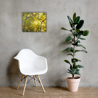 Aged Golden Leaves Botanical Nature Canvas Wall Art Prints 16×20 - PIPAFINEART